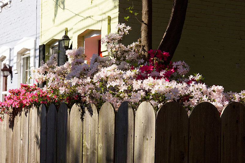 4-2014-wash-dc-ghousetour-wh-garden-annapolis-26935-version-2