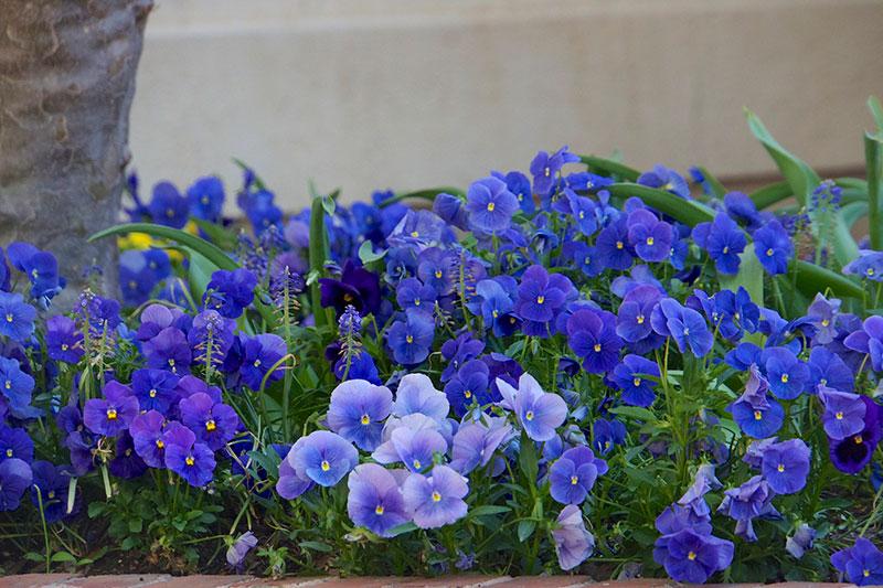 4-2014-wash-dc-ghousetour-wh-garden-annapolis-27180-version-2