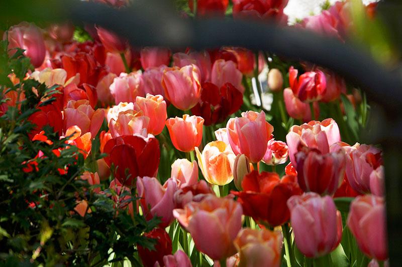4-2014-wash-dc-ghousetour-wh-garden-annapolis-27255-version-2