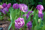 April 2016 WashingtonGardens 48007 - Version 2.jpg
