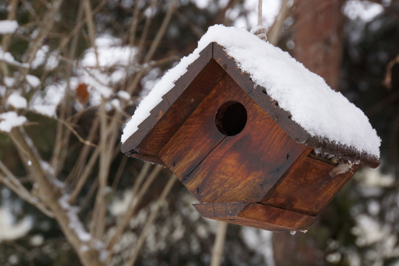 CliftonBeachWinter-birdhouse